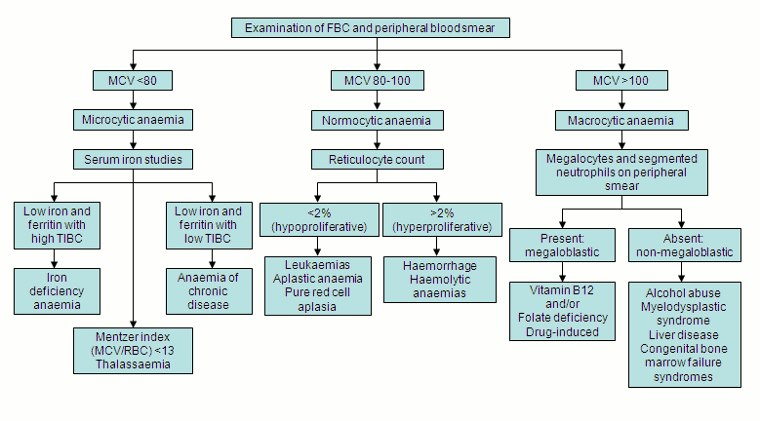 Anemia Differential Diangnosis - Medical Institution