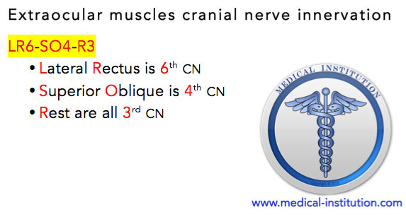 Extraocular Muscles Cranial Nerve Innervation Mnemonic
