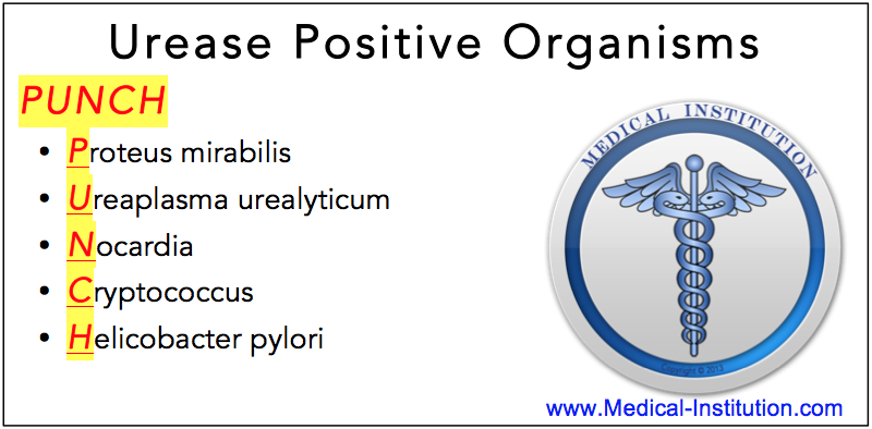 Urease Positive Organisms Mnemonic